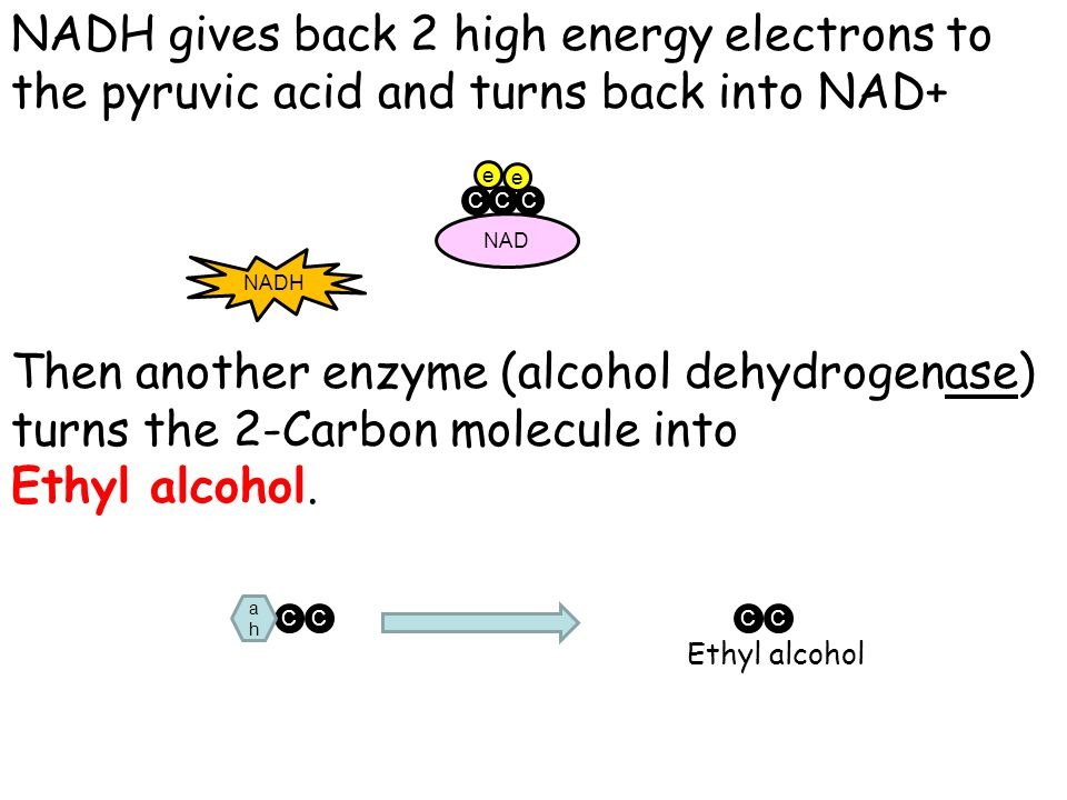NADH gives back 2 high energy electrons to the pyruvic acid and turns back into NAD+