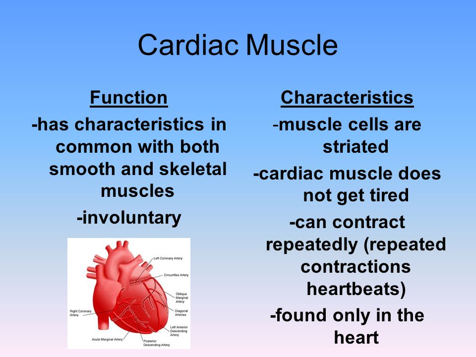 Cardiac Muscle Function -has characteristics in common with both smooth and skeletal muscles -involuntary