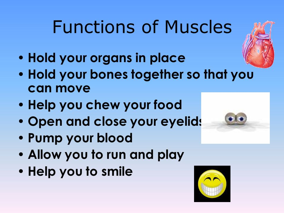 Functions of Muscles Hold your organs in place