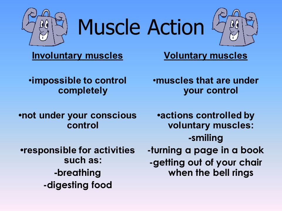 Muscle Action Involuntary muscles •impossible to control completely