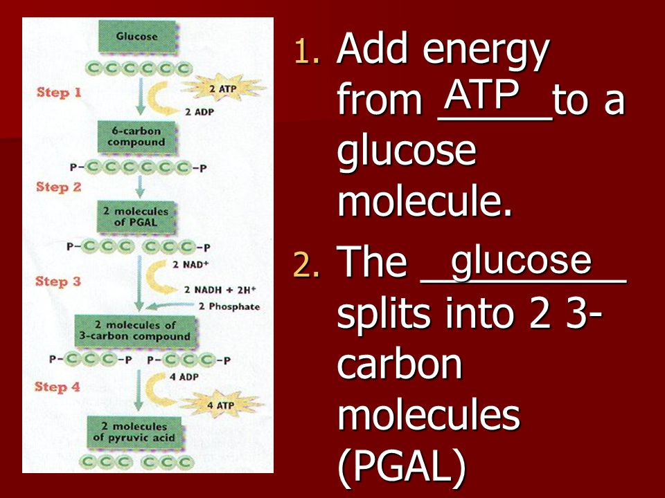 Add energy from _____to a glucose molecule.
