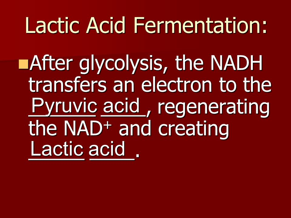 Lactic Acid Fermentation:
