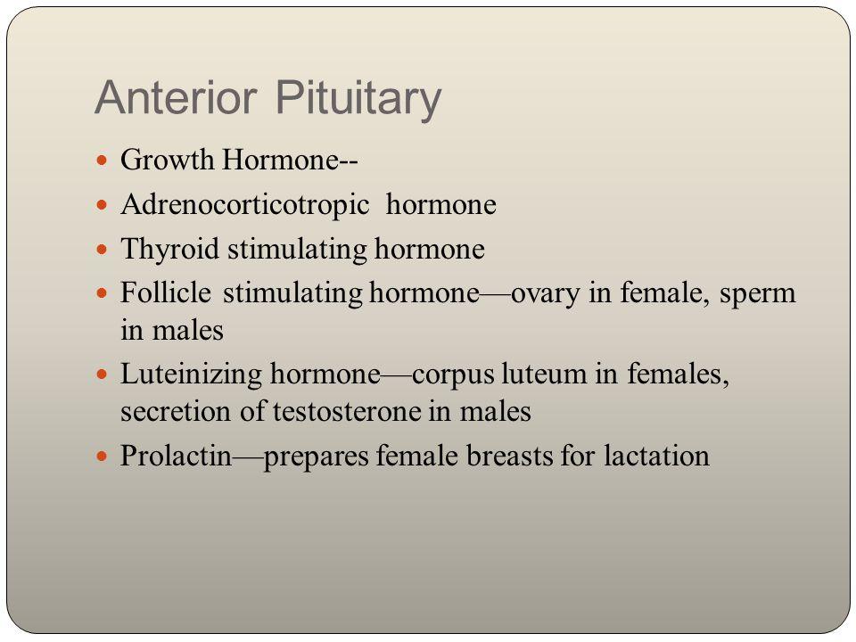 Anterior Pituitary Growth Hormone-- Adrenocorticotropic hormone