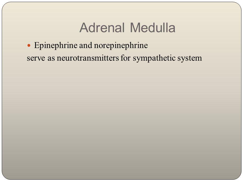 Adrenal Medulla Epinephrine and norepinephrine