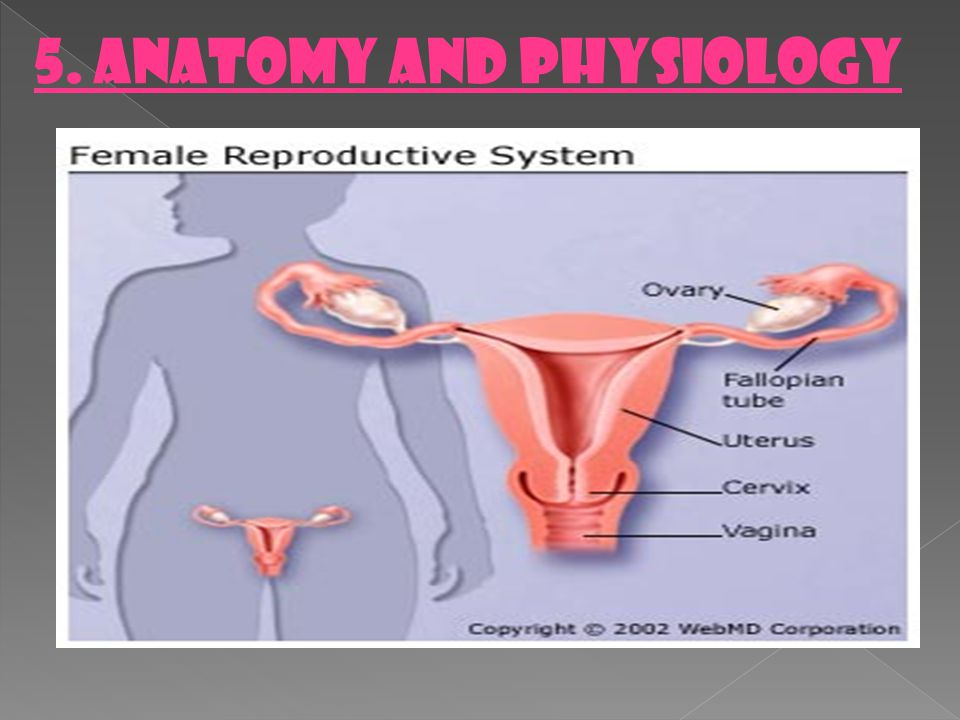 5. ANATOMY AND PHYSIOLOGY