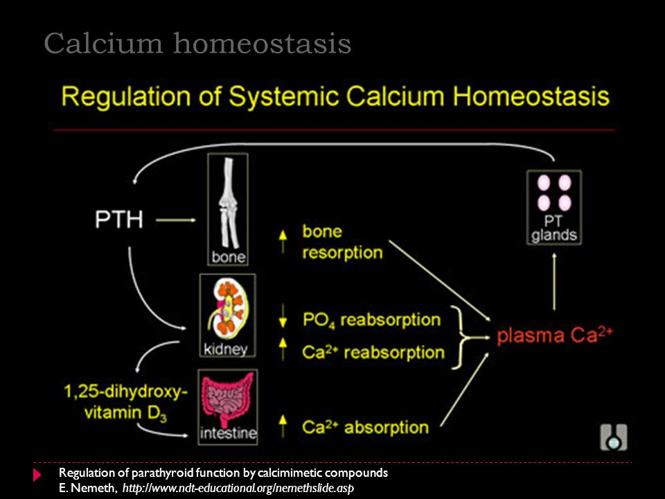 Calcium homeostasis Regulation of parathyroid function by calcimimetic compounds.