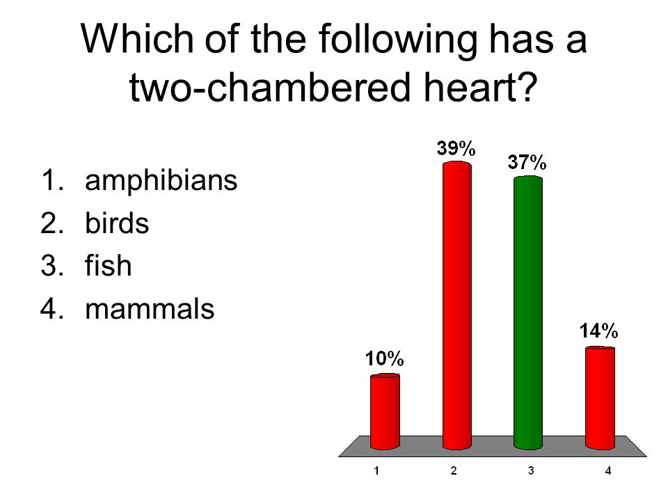 Which of the following has a two-chambered heart