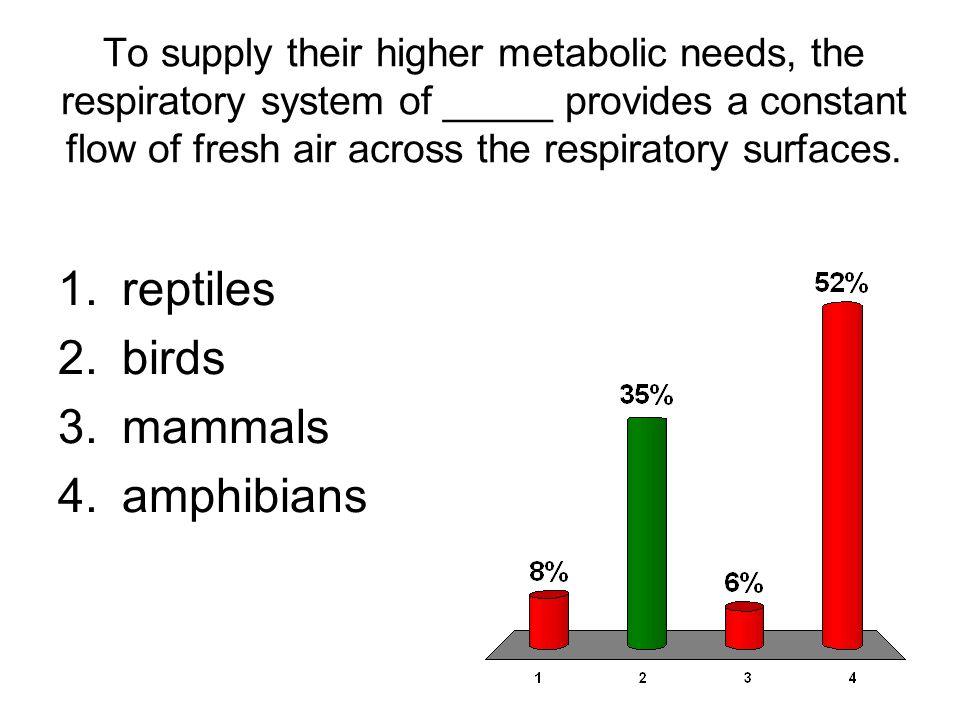reptiles birds mammals amphibians