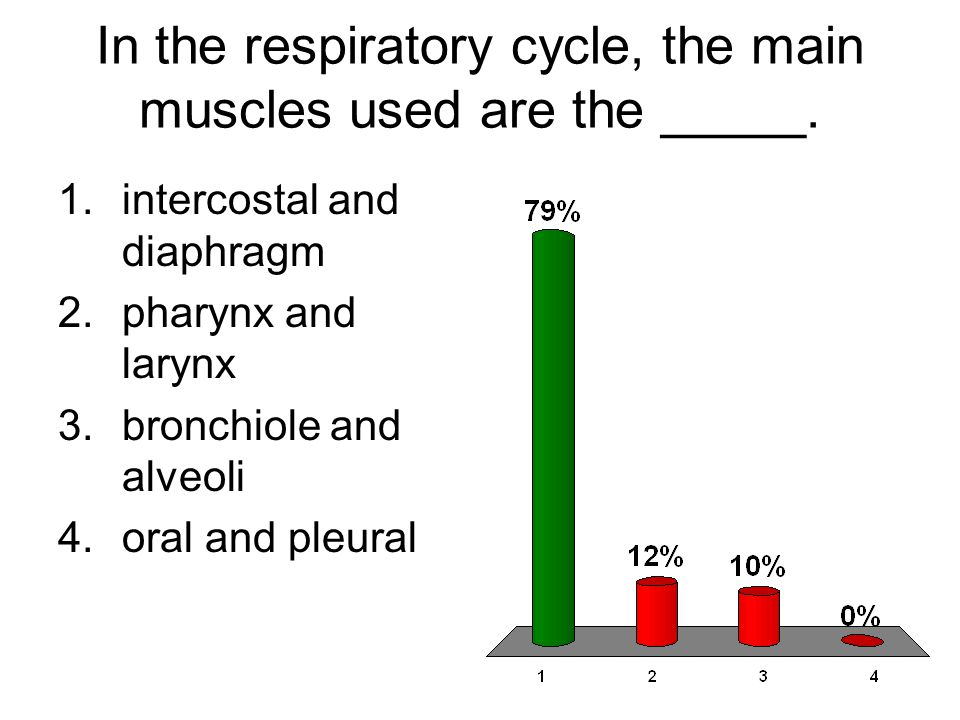 In the respiratory cycle, the main muscles used are the _____.