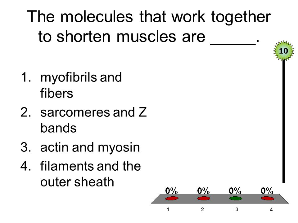 The molecules that work together to shorten muscles are _____.