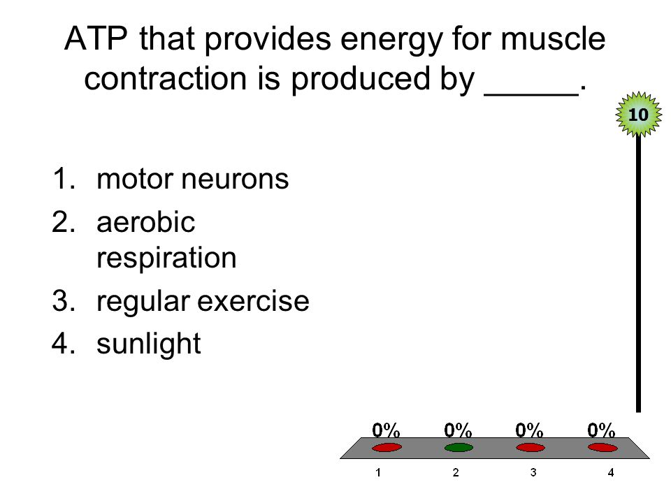 ATP that provides energy for muscle contraction is produced by _____.