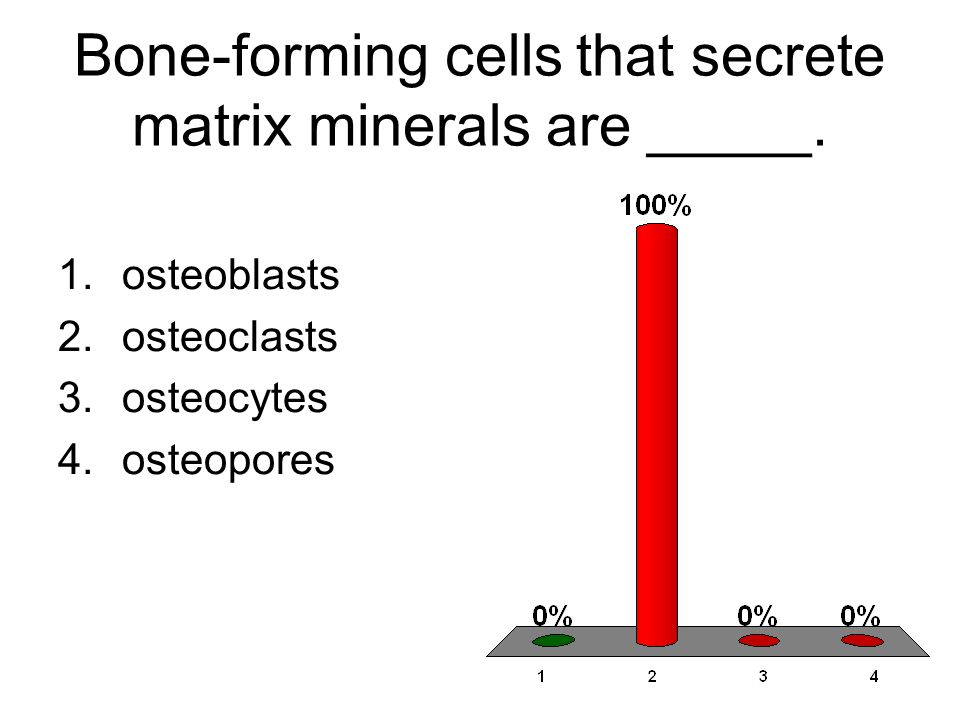 Bone-forming cells that secrete matrix minerals are _____.
