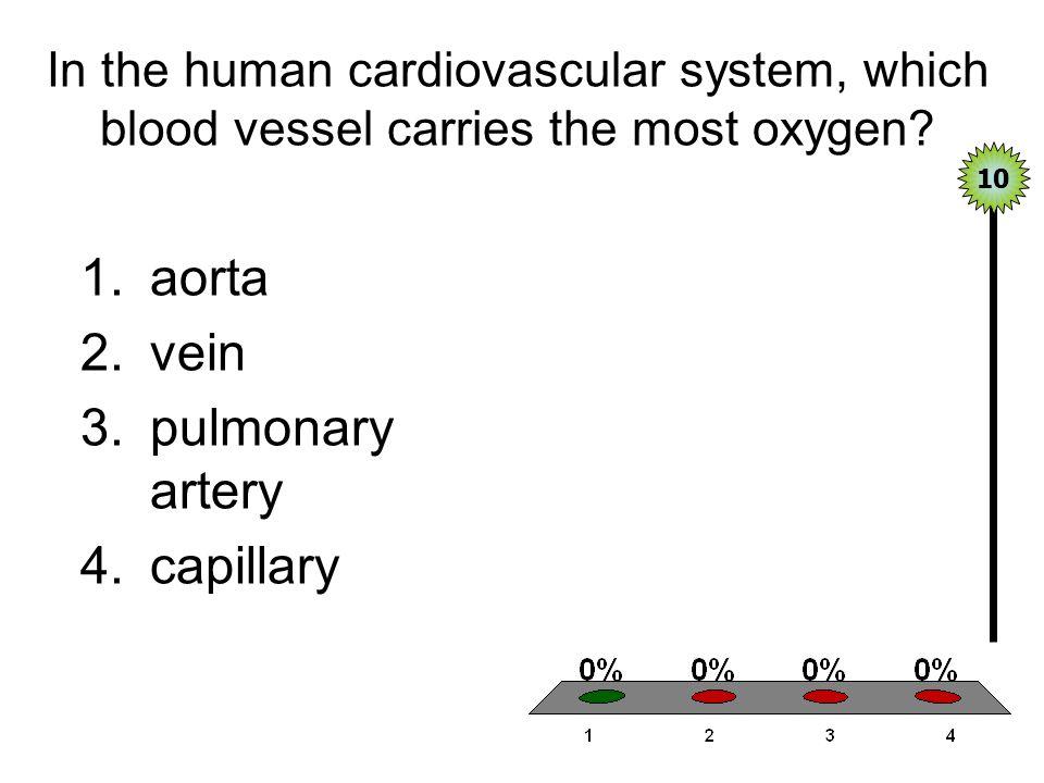 aorta vein pulmonary artery capillary