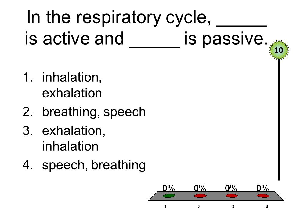 In the respiratory cycle, _____ is active and _____ is passive.