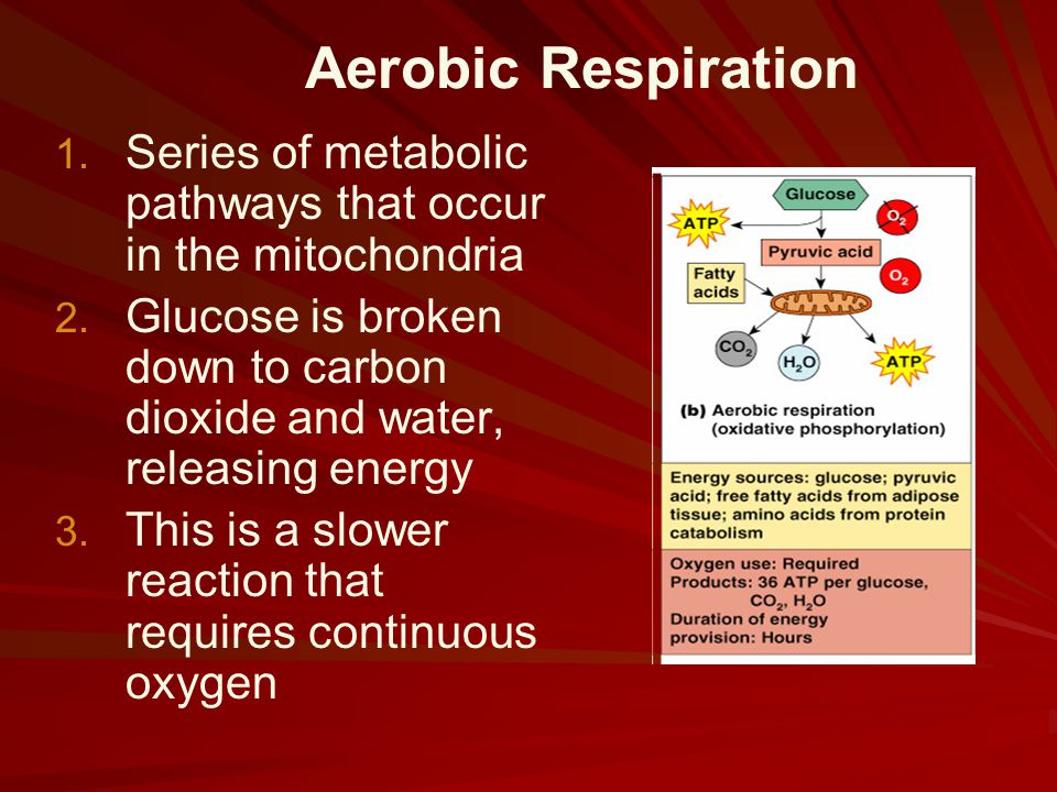 Aerobic Respiration Series of metabolic pathways that occur in the mitochondria.