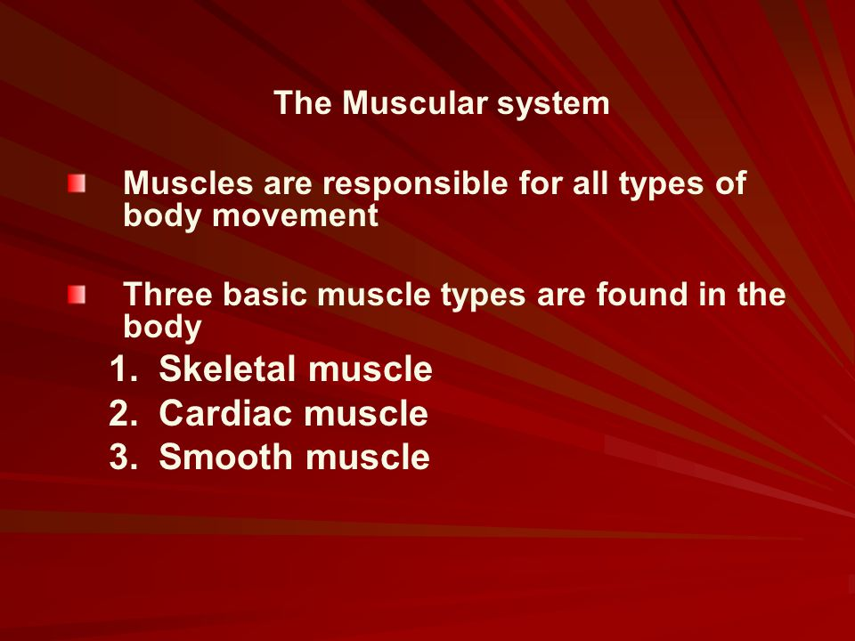 Skeletal muscle Cardiac muscle Smooth muscle The Muscular system