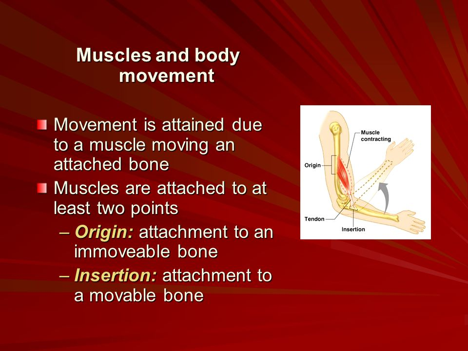 Muscles and body movement