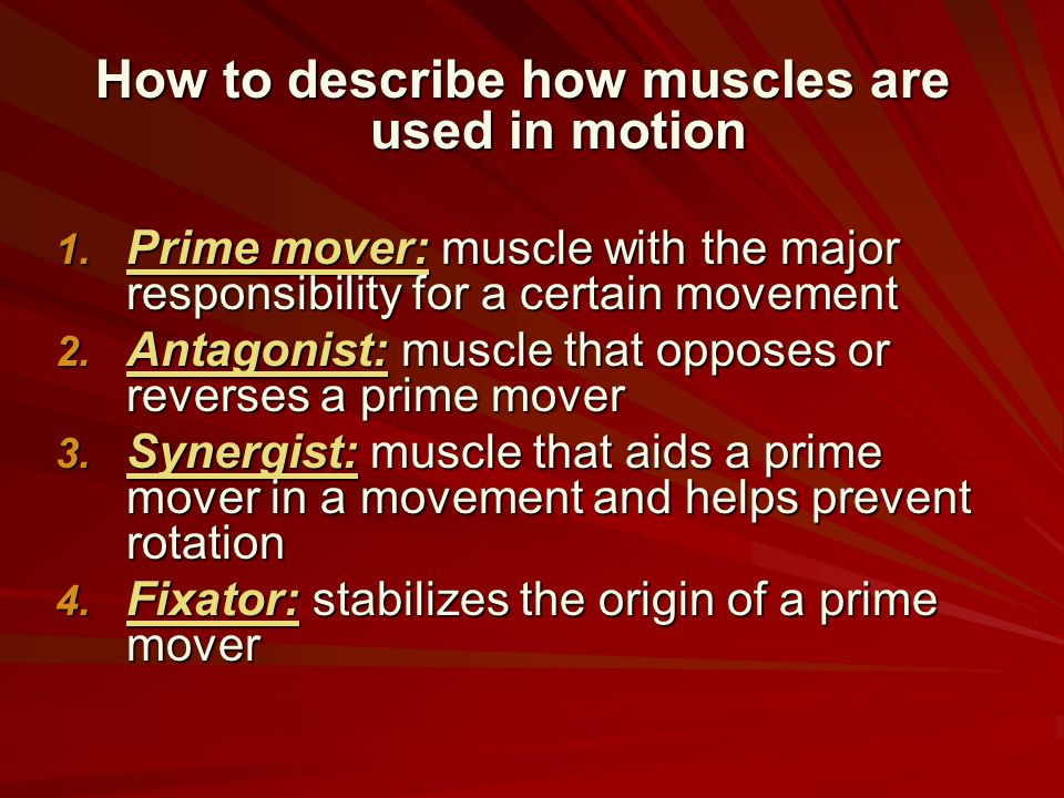 How to describe how muscles are used in motion