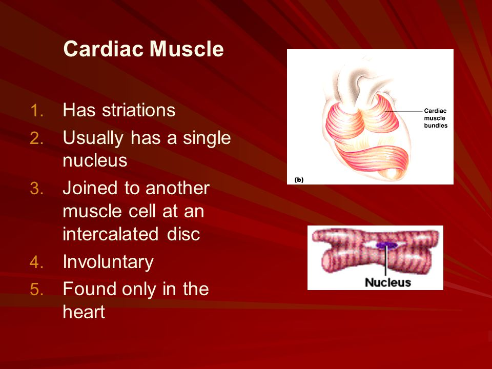 Cardiac Muscle Has striations Usually has a single nucleus