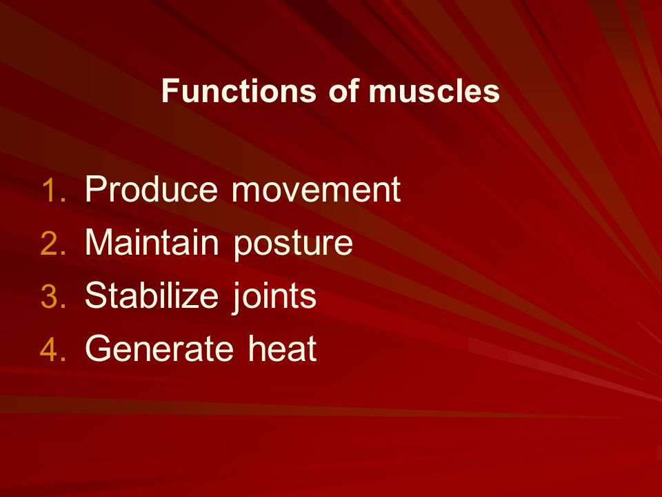 Produce movement Maintain posture Stabilize joints Generate heat