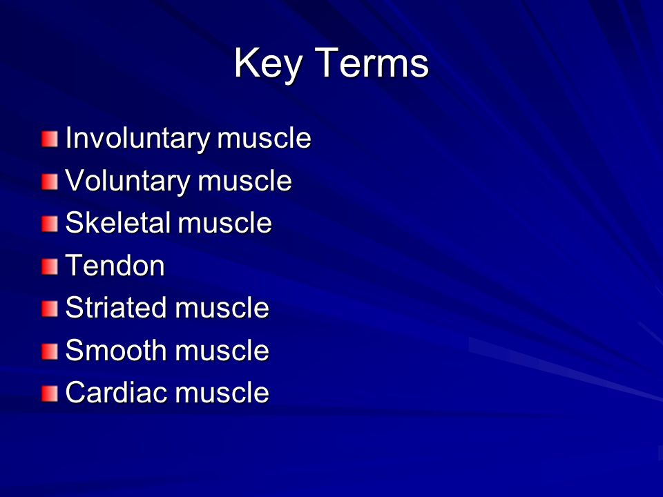 Key Terms Involuntary muscle Voluntary muscle Skeletal muscle Tendon