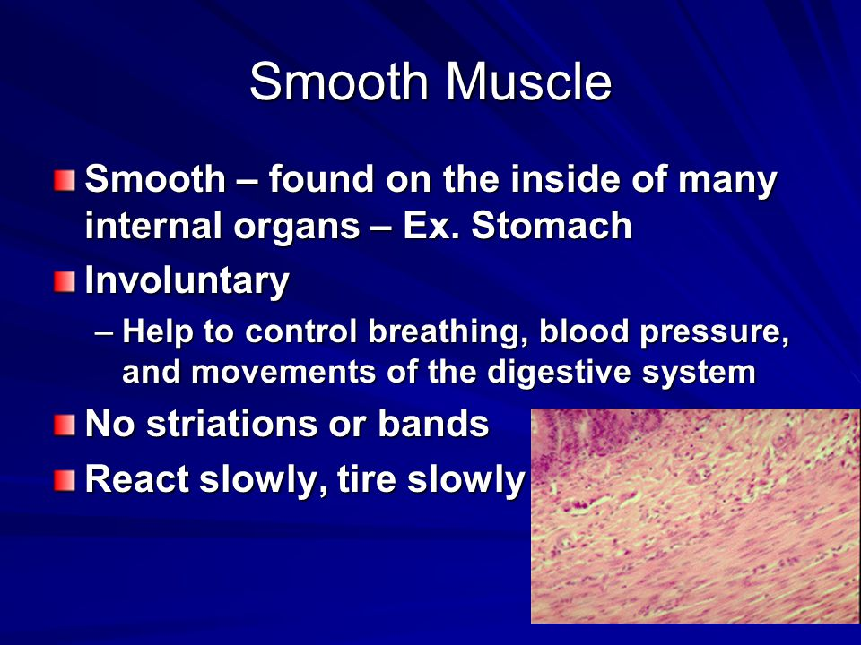 Smooth Muscle Smooth – found on the inside of many internal organs – Ex. Stomach. Involuntary.