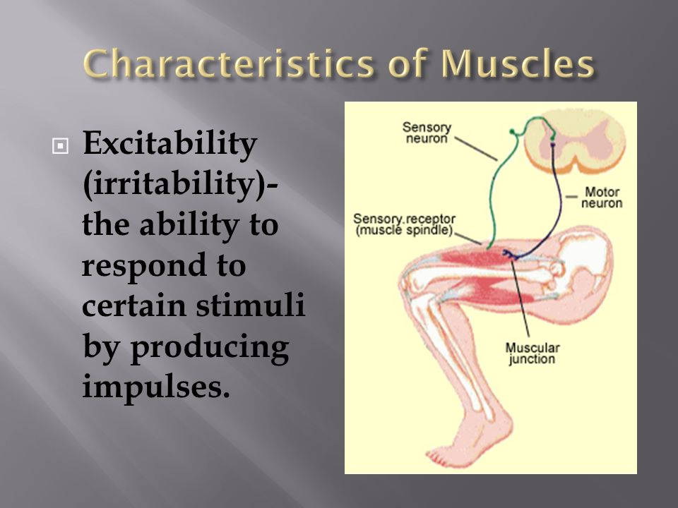 Excitability (irritability)- the ability to respond to certain stimuli by producing impulses.