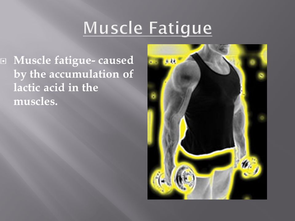 Muscle Fatigue Muscle fatigue- caused by the accumulation of lactic acid in the muscles.