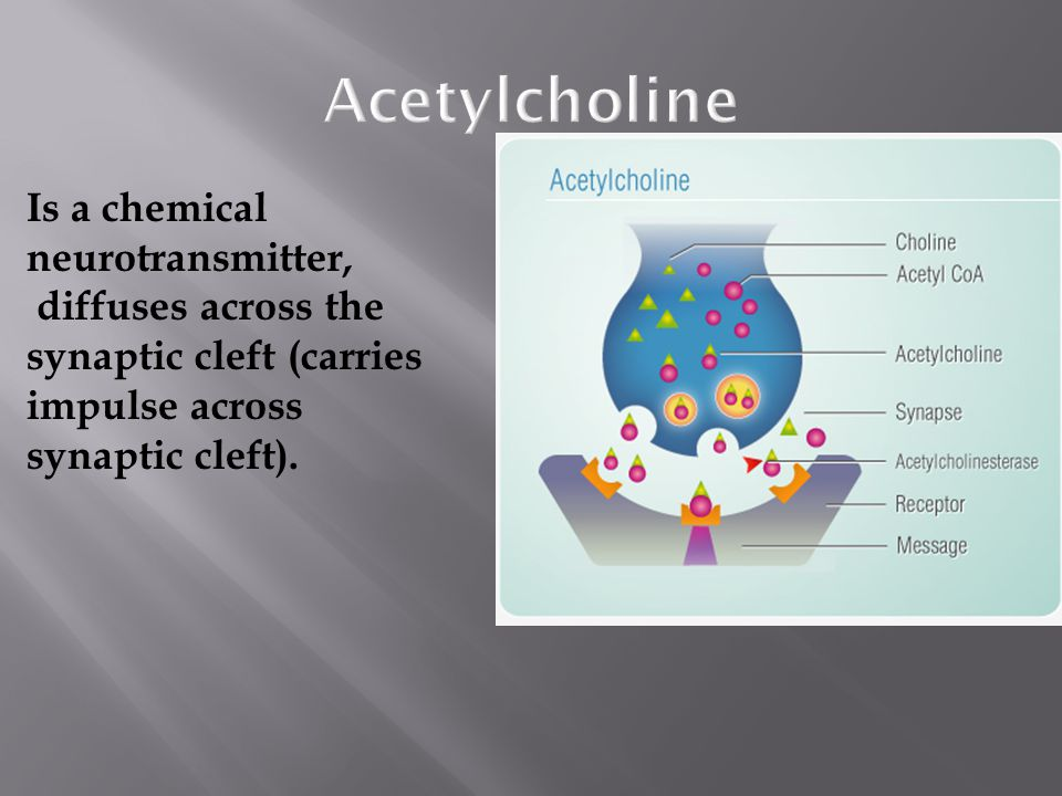 Acetylcholine Is a chemical neurotransmitter, diffuses across the