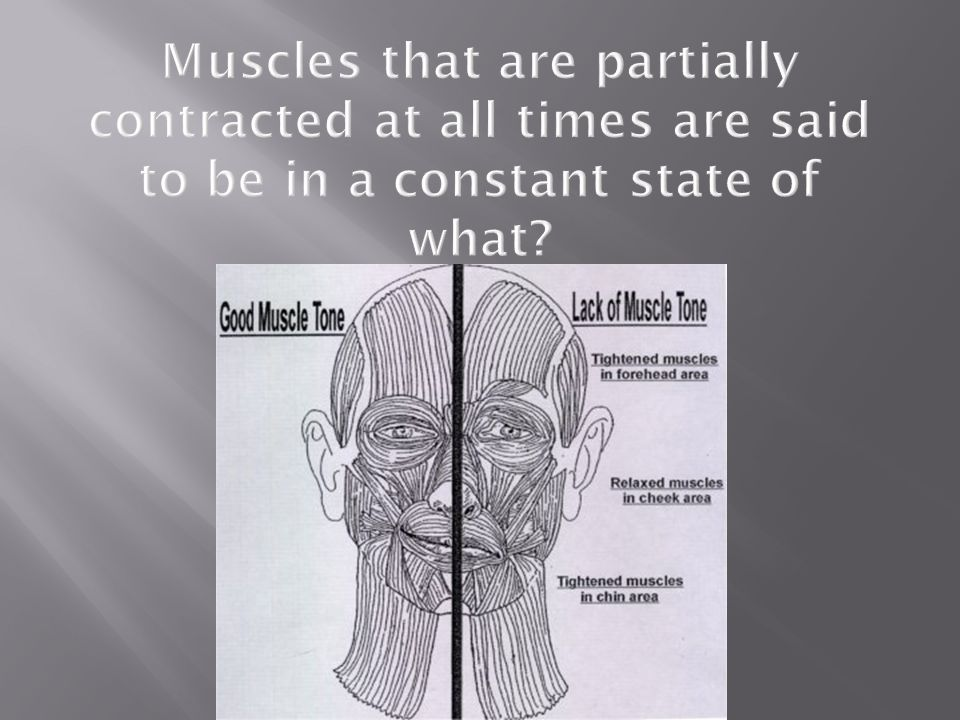 Muscles that are partially contracted at all times are said to be in a constant state of what