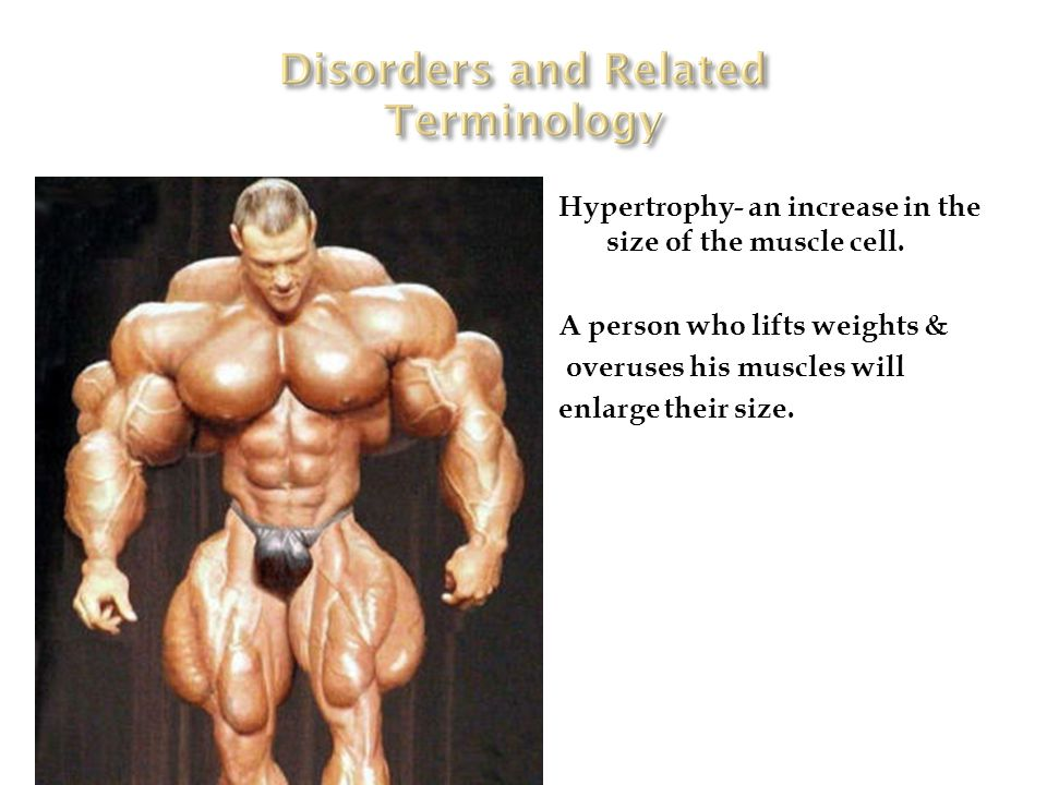 Hypertrophy- an increase in the size of the muscle cell.