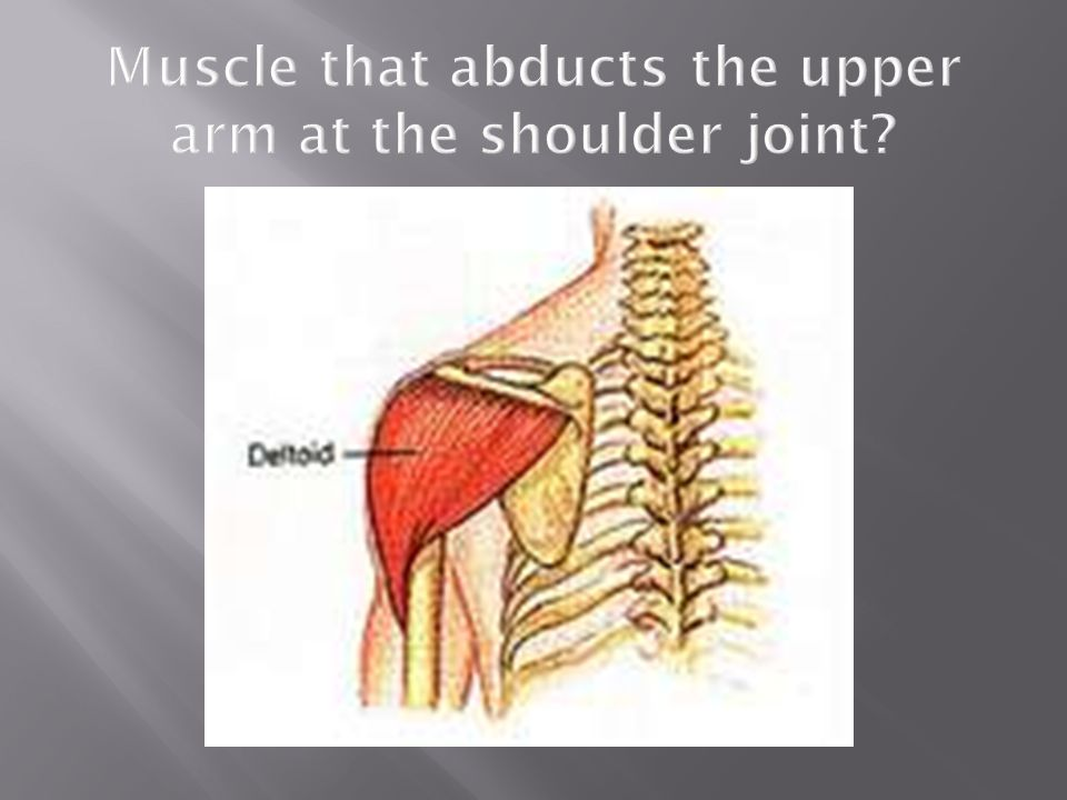 Muscle that abducts the upper arm at the shoulder joint