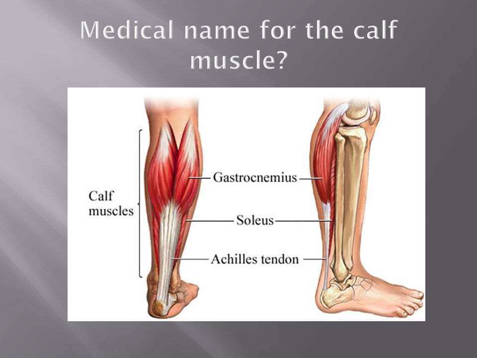 Medical name for the calf muscle