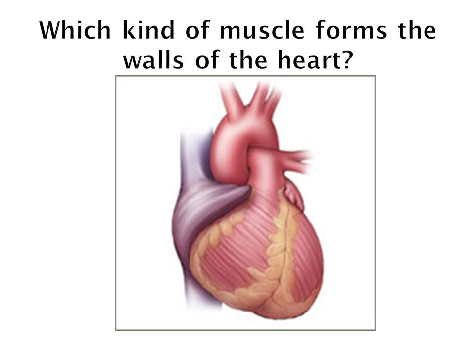 Which kind of muscle forms the walls of the heart