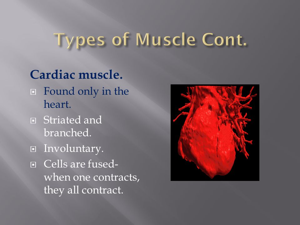 Types of Muscle Cont. Cardiac muscle. Found only in the heart.