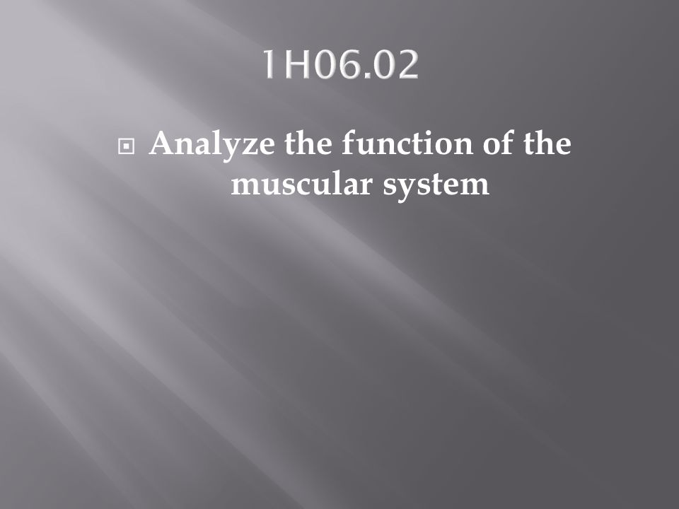 Analyze the function of the muscular system