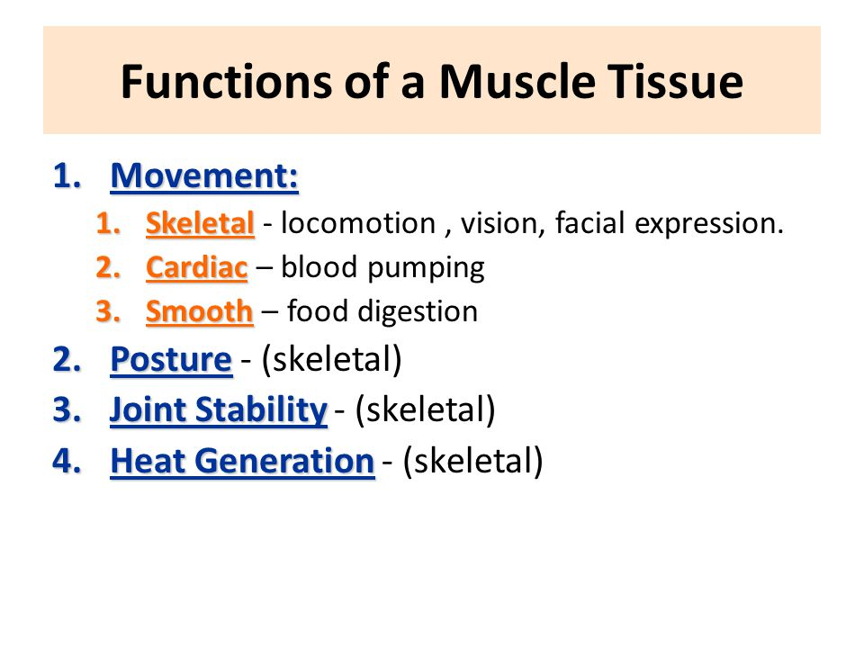 Functions of a Muscle Tissue
