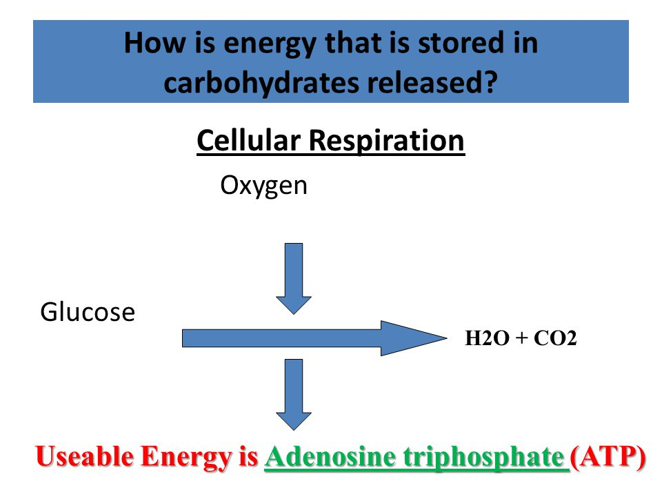 How is energy that is stored in carbohydrates released