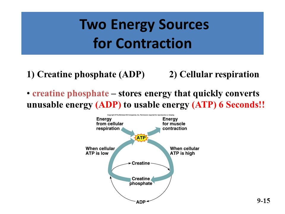 Two Energy Sources for Contraction