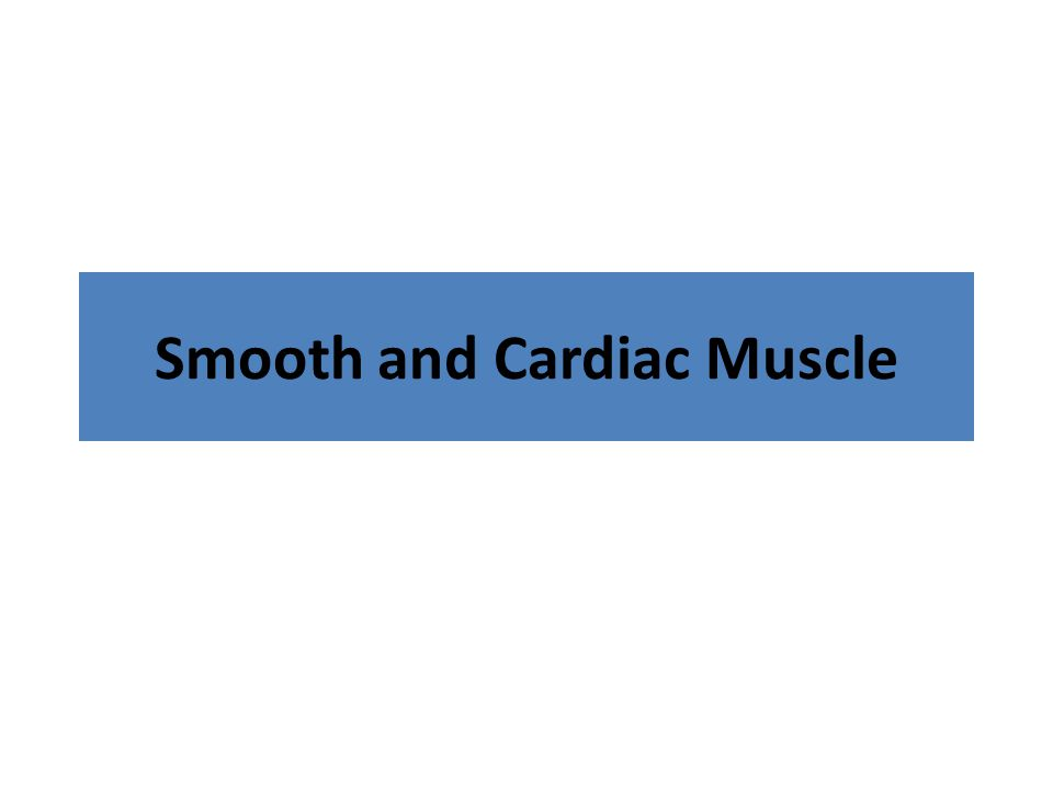 Smooth and Cardiac Muscle