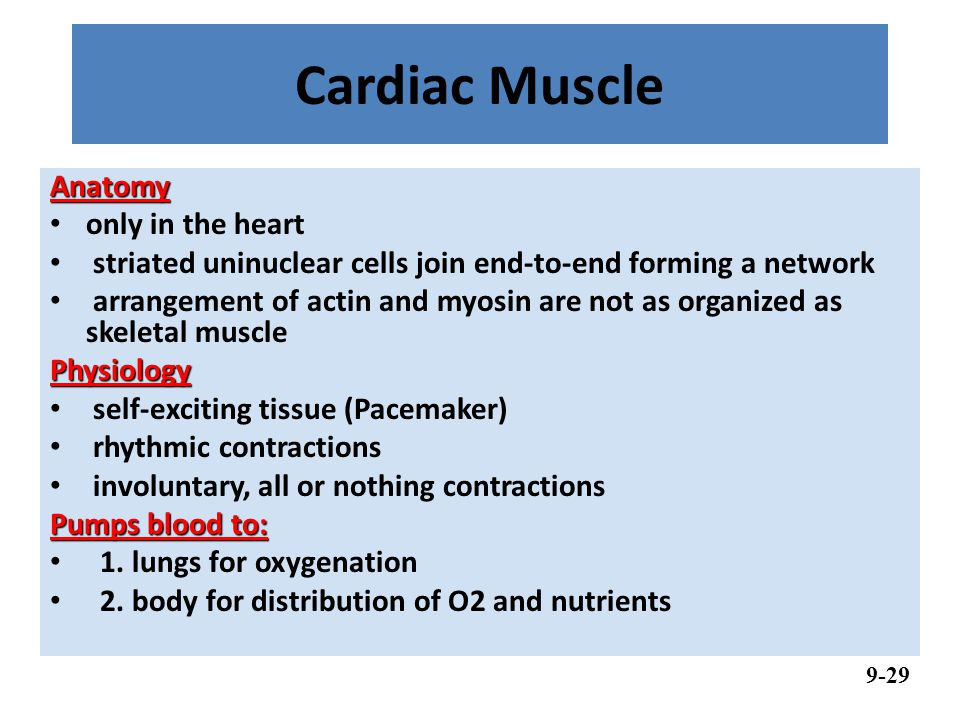 Cardiac Muscle Anatomy only in the heart