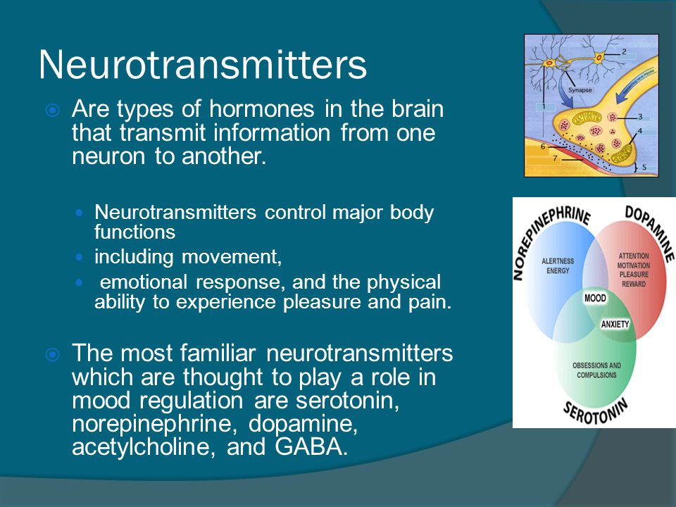 Neurotransmitters Αre types of hormones in the brain that transmit information from one neuron to another.