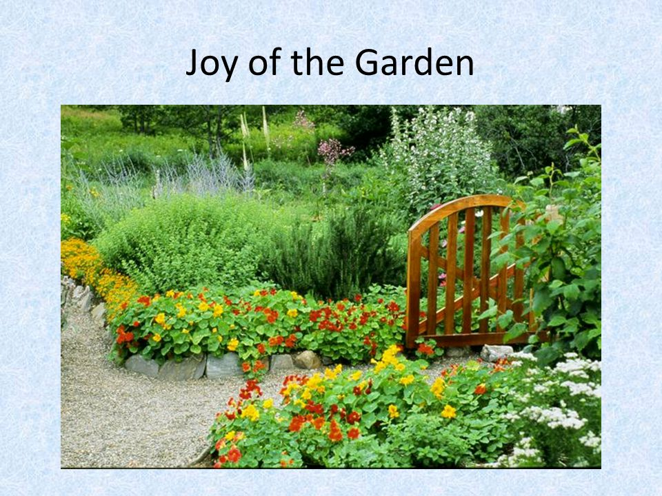 Joy of the Garden