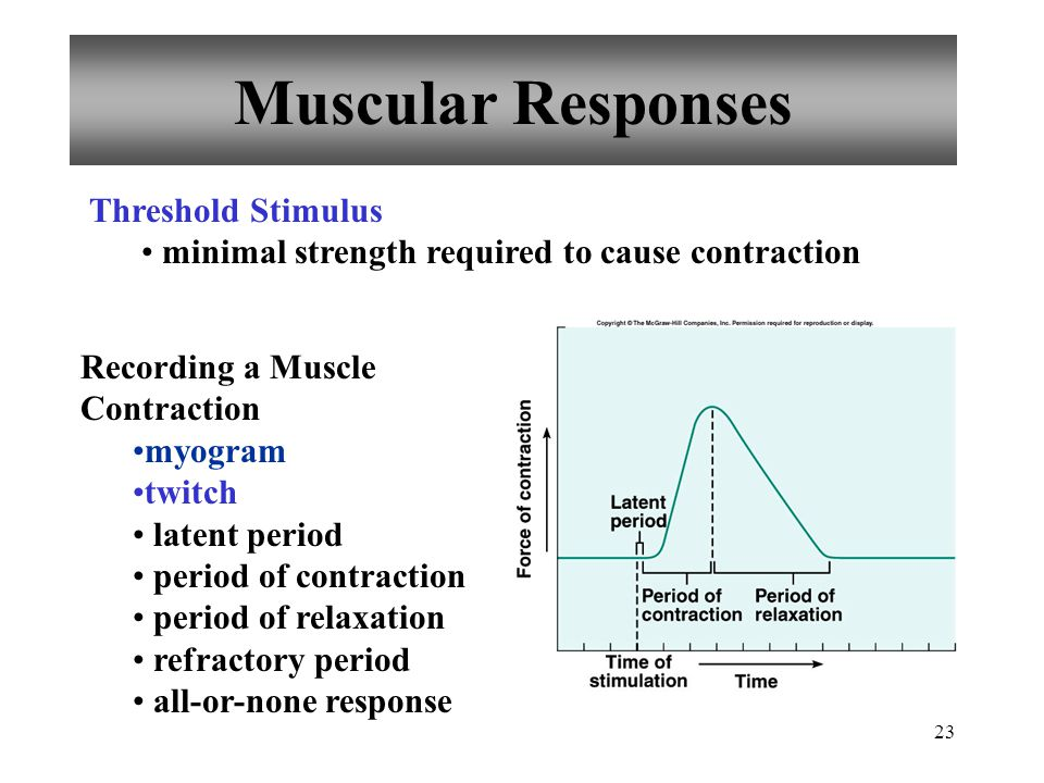 Muscular Responses Threshold Stimulus
