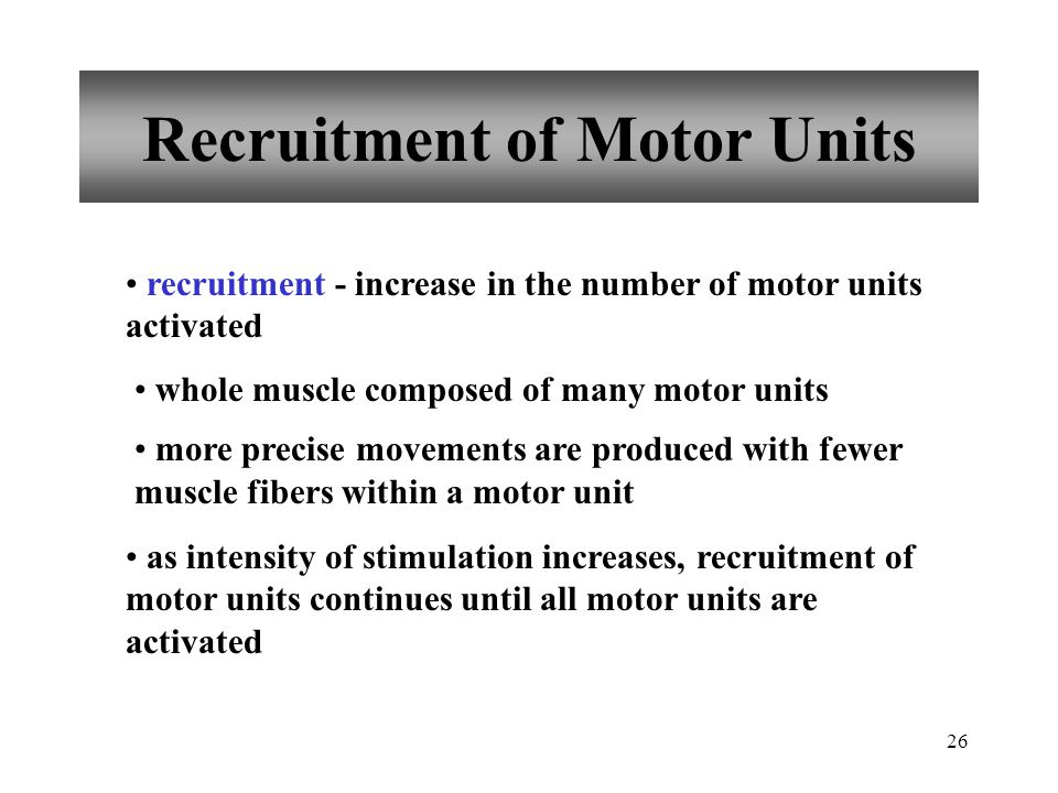 Recruitment of Motor Units