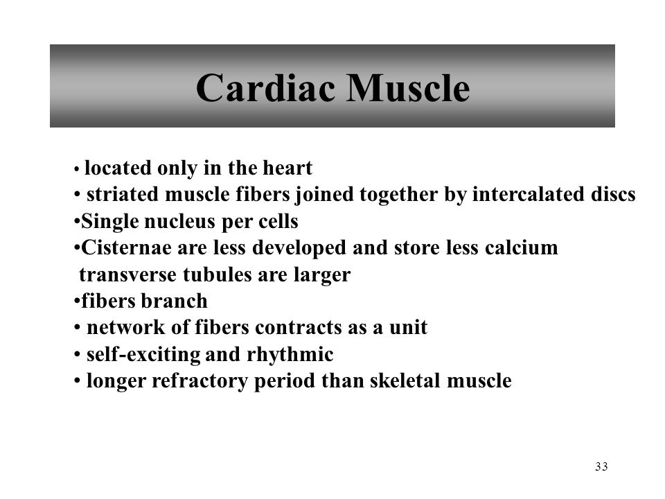 Cardiac Muscle located only in the heart. striated muscle fibers joined together by intercalated discs.