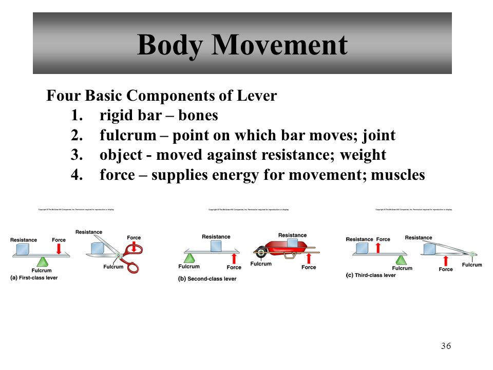 Body Movement Four Basic Components of Lever rigid bar – bones