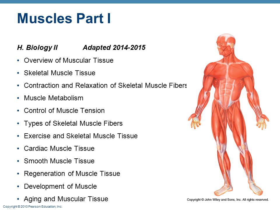 Muscles Part I H. Biology II Adapted 2014-2015