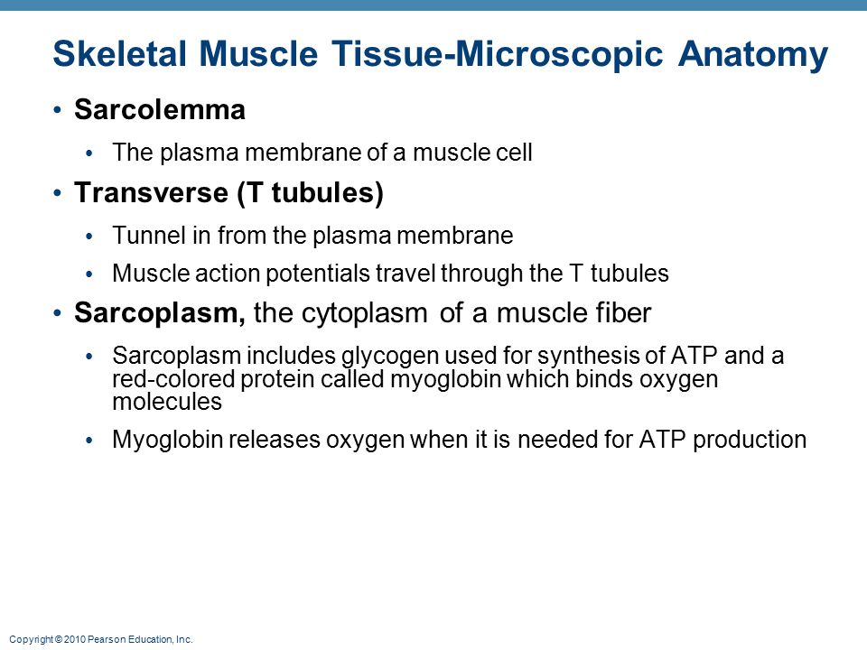 Skeletal Muscle Tissue-Microscopic Anatomy