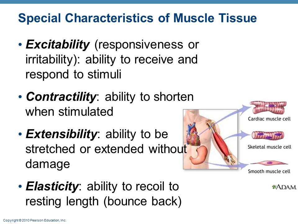 Special Characteristics of Muscle Tissue